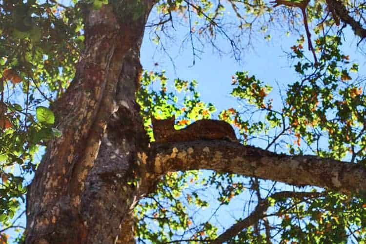 Bobcat:  The preserve is home to an array of wildlife, including bobcats