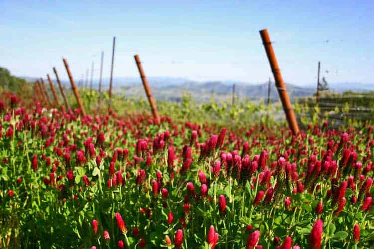 Cover Crop:  The red clover cover crop feeds the soil over the winter months