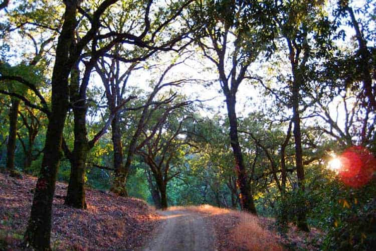 Nature Preserve: The remaining 225 acres are managed as an ecological preserve